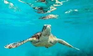 Arte e Ambiente: raccolta fondi per salvare le tartarughe