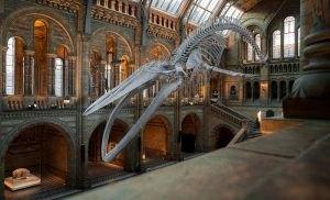 I musei statali valgono l'1,6% del Pil italiano.